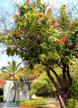 Standing On The Sun In San Juan